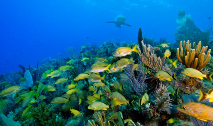 Diving jardines de la reina avalon cuban diving centers for Letras gijon jardines de la reina
