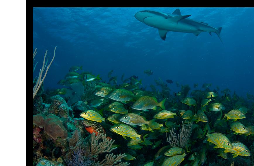 Cuba Diving Avalon Cuban Diving Centers Destinations Dive Sharks